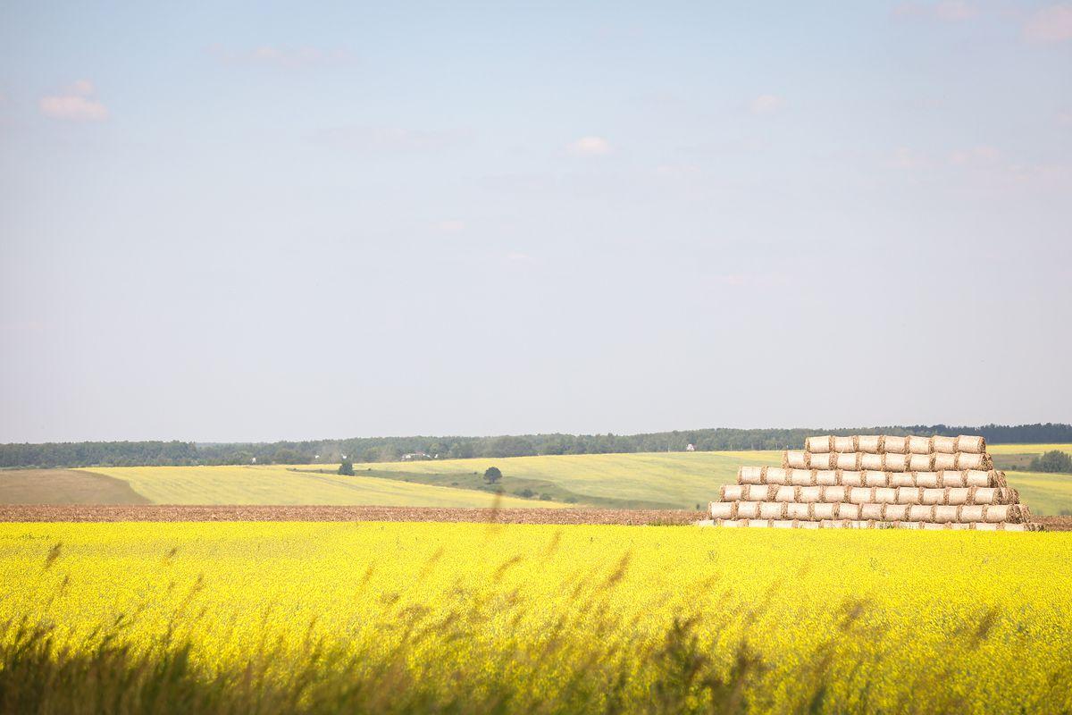 Андрей Воробьев губернатор московской области - Аграрии в Кашире