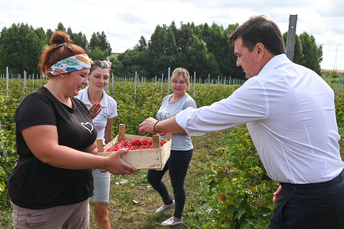 Андрей Воробьев губернатор московской области - Свежие даже зимой. В Подмосковье применяют новую систему хранения ягод